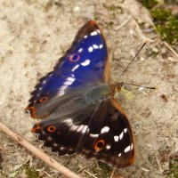о бабочках 2 :: Александр Прокудин