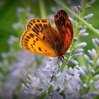 о бабочках 4 :: Александр Прокудин