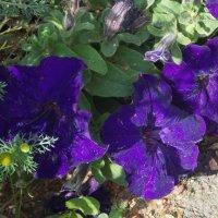 Еще не осень :: Фотогруппа Весна - Вера, Саша, Натан