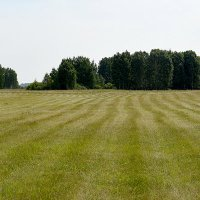 Траву скосили и убрали... :: Дмитрий Петренко