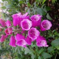 цветы :: Марина Итина