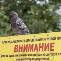 Смотрящий над площадкой. :: Анатолий. Chesnavik.