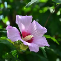 цветы :: Константин Трапезников
