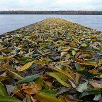 Осенний пирс :: Марина