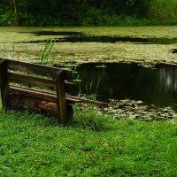 Дачный пруд :: kolyeretka