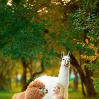 Семейное с альпакой :: Фролов Фролов