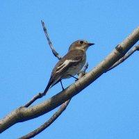 Птичка :: Александр Чеботарь