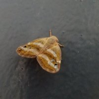 Бабочка :: Наталья (D.Nat@lia)