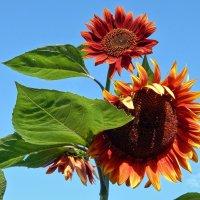 Весёлый символ Лета прохожим шлёт приветы! :) :: Елена Хайдукова  ( Elena Fly )