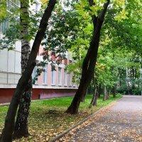 Скоро осень ... :: Лариса Корженевская
