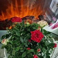 Розы :: ОКСАНА ШВЕЦ