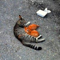 Котята-близнята :: Милла Корн