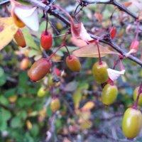 Плоды лета :: Maryana Petrova
