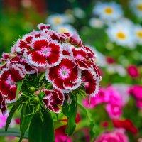 Цветы :: Любовь Рящикова