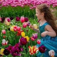 Вероника в стране тюльпанов.. :: Наталья Борисова