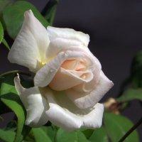 Белая невеста :: Наталья (D.Nat@lia)
