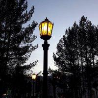 Вечерние фонари :: Зинаида Каширина