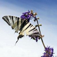 Перебиты, поломаны крылья, но хочется ещё нектару выпить.. :: Андрей Заломленков