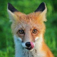 Рыжая улыбашка! :: Svetlana Sneg