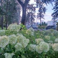 цветы у велодорожки :: sv.kaschuk