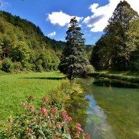 Тихо несет  свои  воды  .речка  Пегнитц :: backareva.irina Бакарева