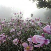 Утро туманное... :: Elena Ророva