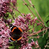 Бабочка :: Roms Grigonis