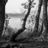 Туманное утро :: Валерий Михмель