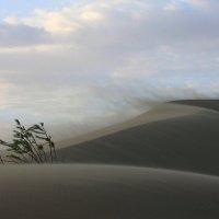 Песчаная вьюга :: Владимир Собардахов