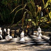 шахматы :: alex graf