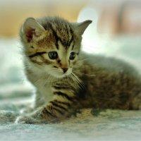 Котенок. :: галина