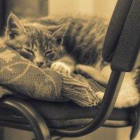 Котя :: Cергей Щагин