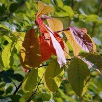 уж осенью листва дышала.. :: Василий