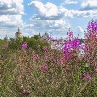 Иван-чай :: Moscow.Salnikov Сальников Сергей Георгиевич