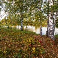 Осенний этюд :: Сергей Винтовкин