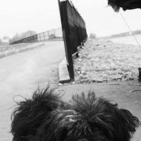 dog :: kirill