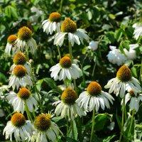 И вновь о летних цветочных коврах... :: Тамара Бедай