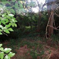 В лесу утреннем :: Сергей Анатольевич