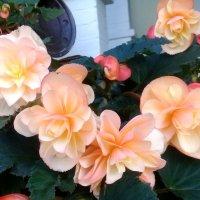 Цветы лета. :: Зоя Чария