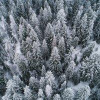 Зимний лес :: Евгений Логинов