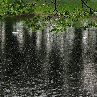 Дождливый день :: Liliya Kharlamova