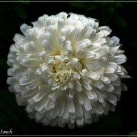 Мелодии цветущего сада. Сентябрь :: muh5257