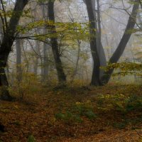 В осеннем лесу...... :: Юрий Цыплятников