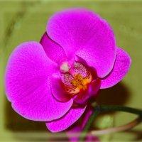 Мне нравятся орхидеи: они имеют цвета воды, огня, земли и Луны. :: Tatiana Markova