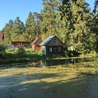 Домик на болоте. :: Ирина Нафаня