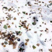 Зимняя спешка. :: Sergii Ruban
