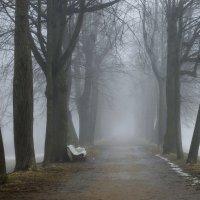 В тумане весеннем... . :: Юрий Цыплятников