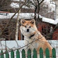 Сосед, кажется улыбается, но здороваться не пойду. :: Вадим
