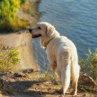 Labrador :: Алексей Головин