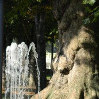 Фонтан и дерево :: Sabina